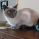 Propose séjour à Lausanne pour s'occuper du chat